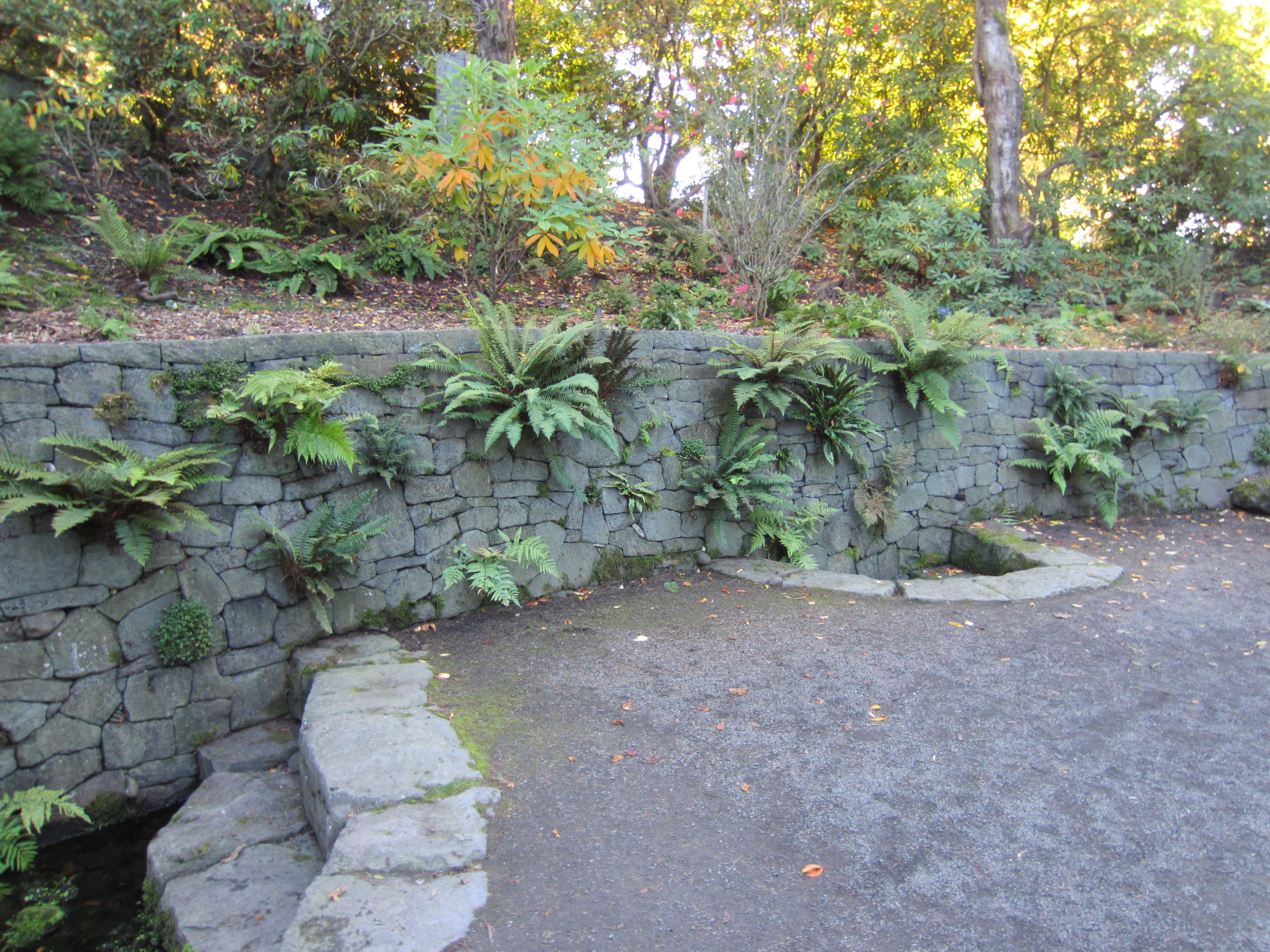 FileCrystal Springs Rhododendron Garden Portland 2013
