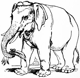 EB1911 Elephant - Fig. 1 Asiatic Elephant.jpg