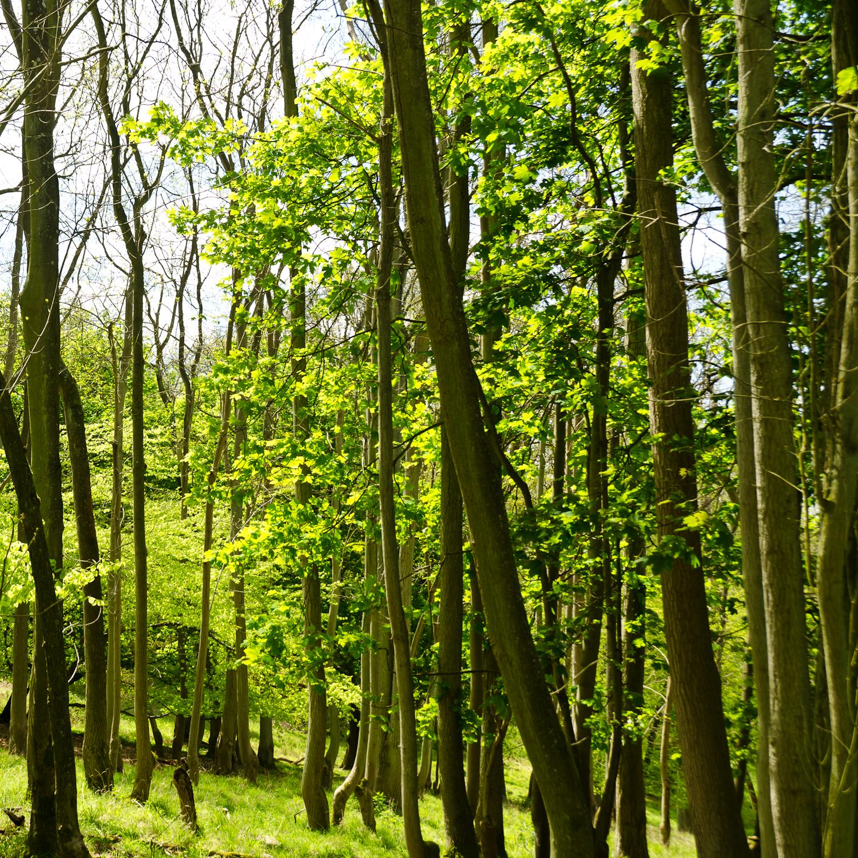 woods wallpaper uk
