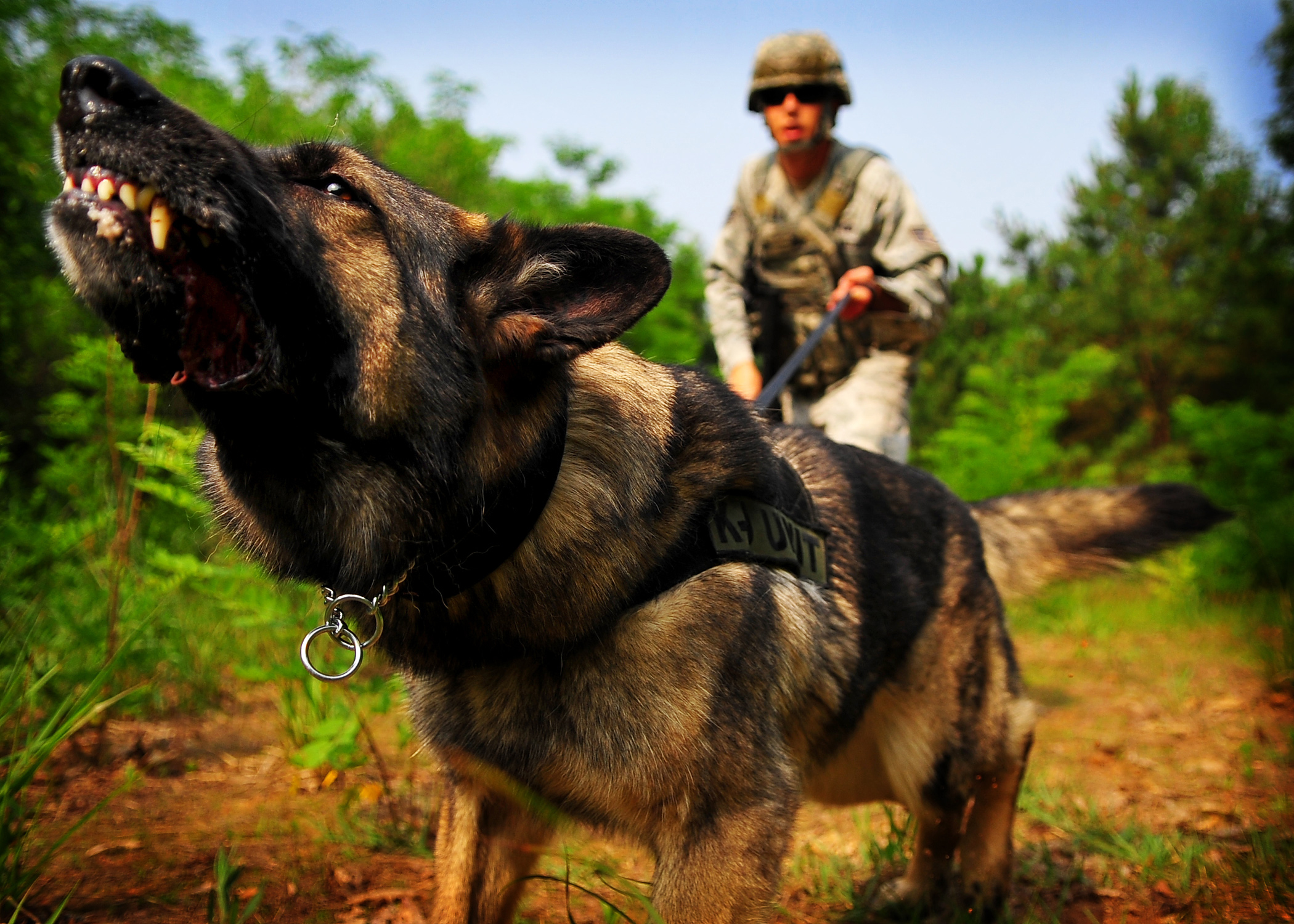 Dog Training Las Vegas Aggression