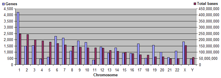 Genes and bases on chromosomes.png