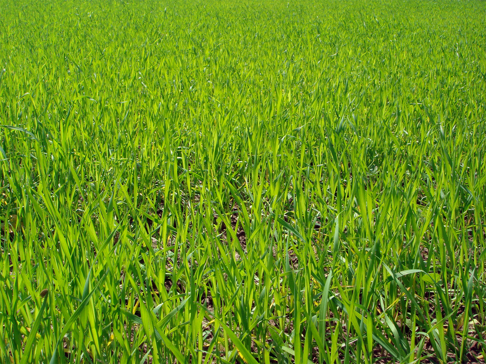 fields and grass - photo #48