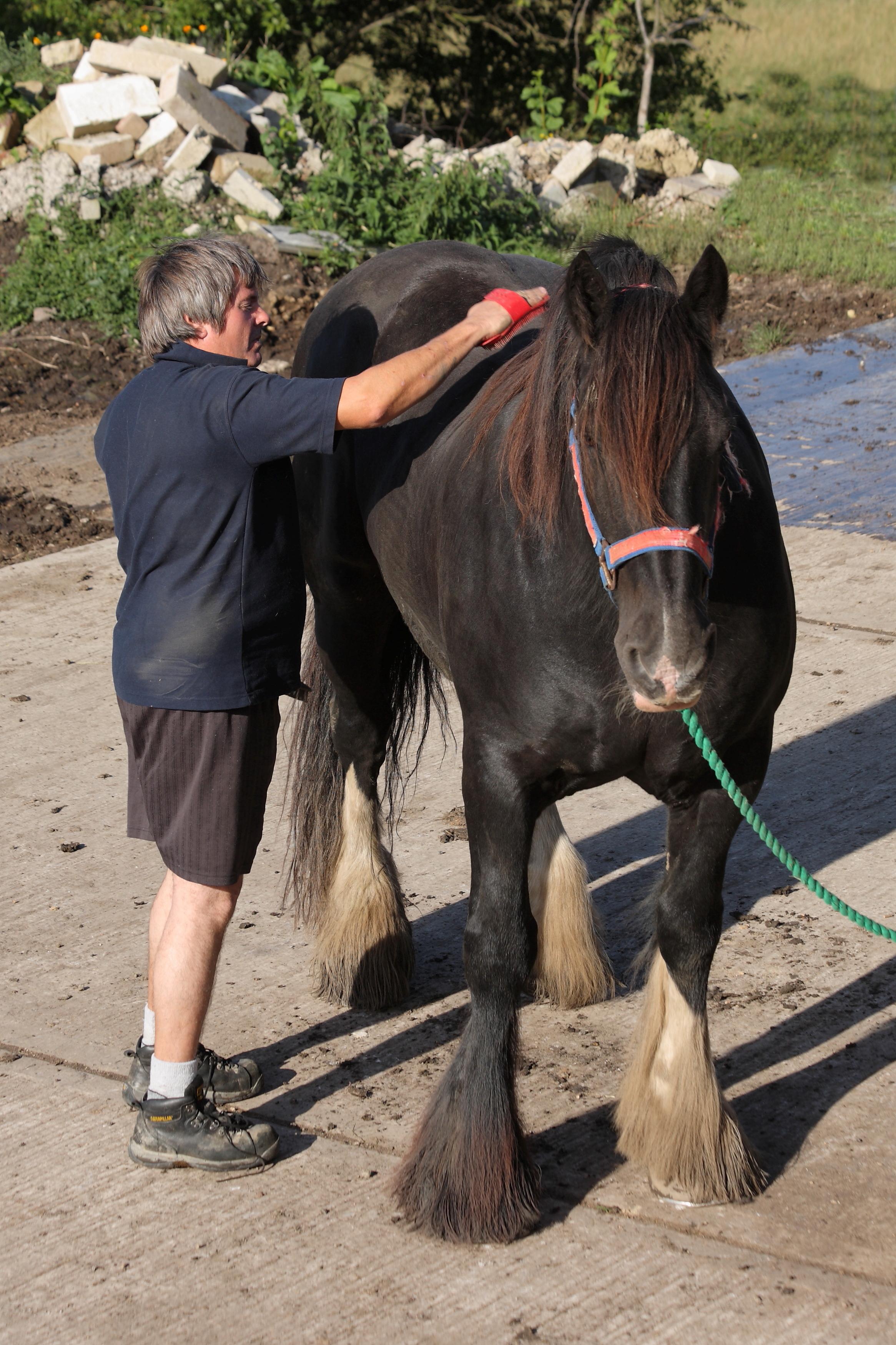 Grooming en hest