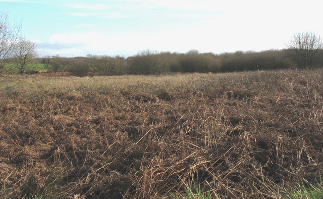 Infertile wetland south of Bryn Farm - geograph.org.uk - 676558.jpg