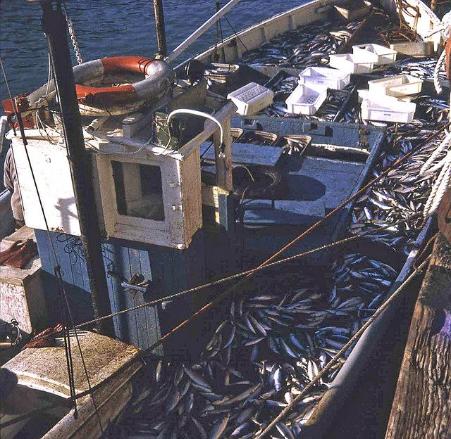 A mackerel boat