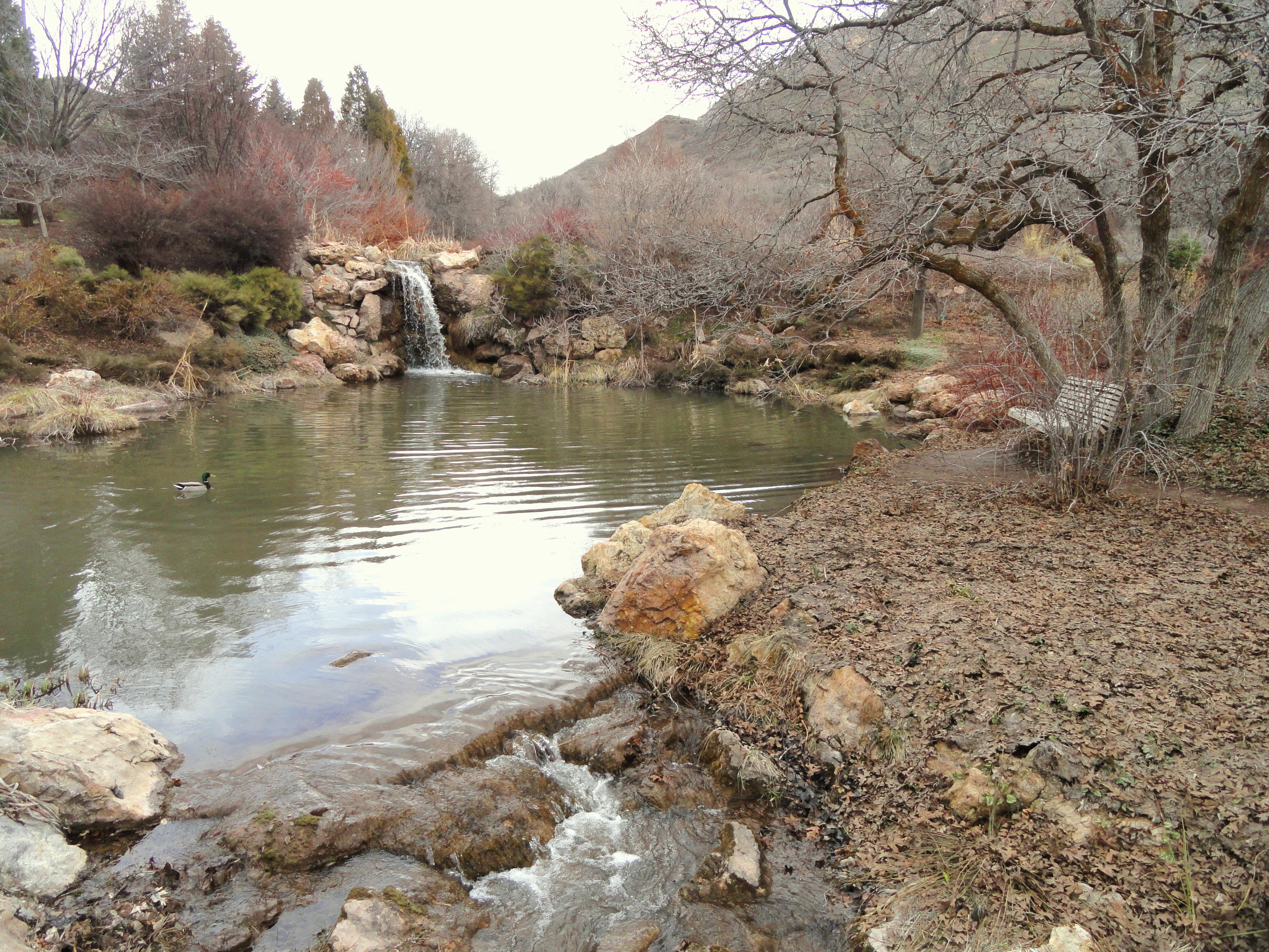 File March Vista Red Butte Garden And Arboretum Dsc07500 Jpg