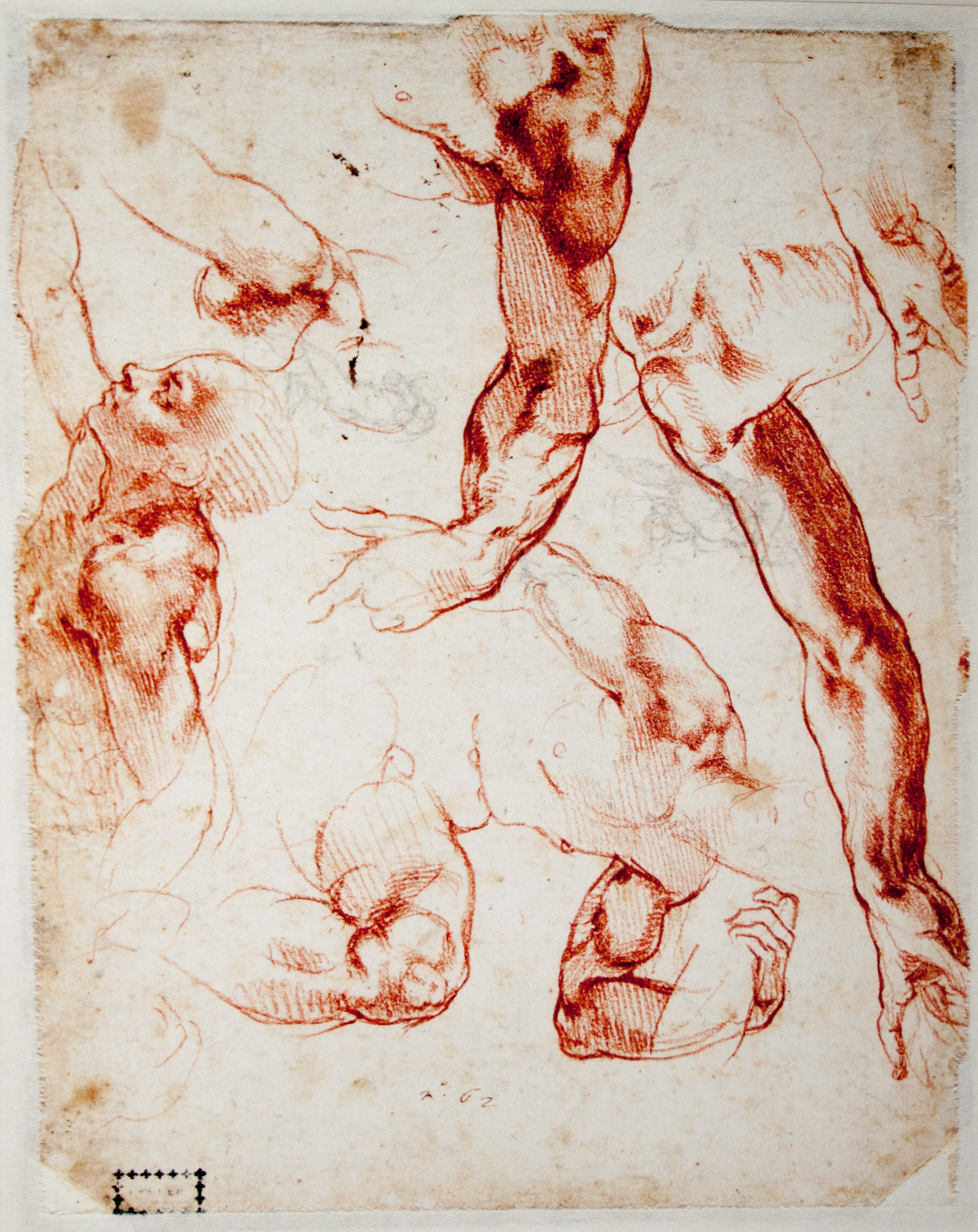 Filemichelangelo Studies Of Figures And Limbsg Wikimedia Commons