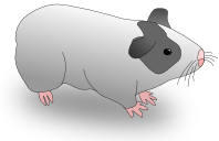 OpenMxguineapig.png