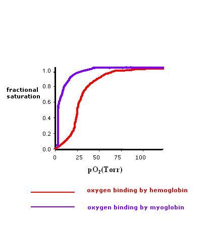 Structural Biochemistry/Hemoglobin - Wikibooks, open books for an