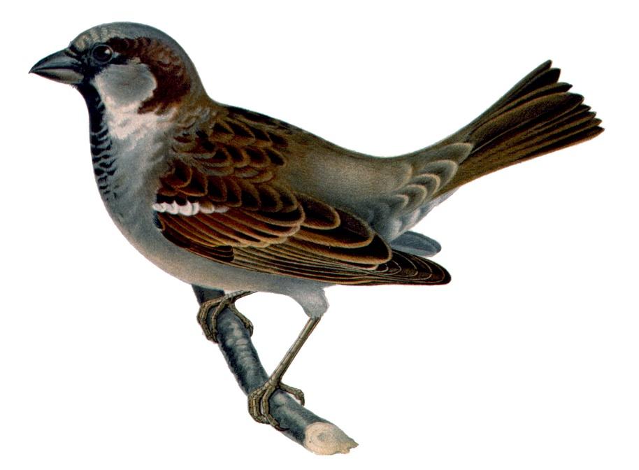 фото и название птиц подмосковья
