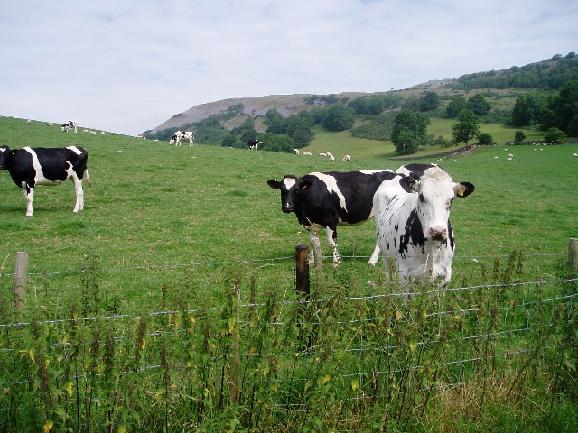 Pasture below Farleton Fell - geograph.org.uk - 28629