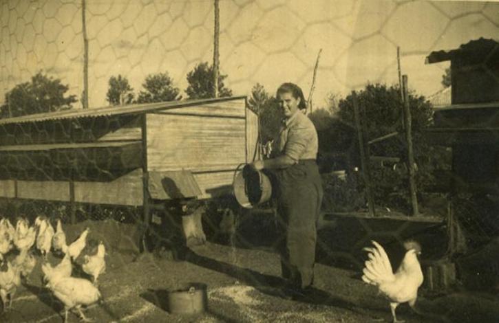 מאכילה תרנגולות