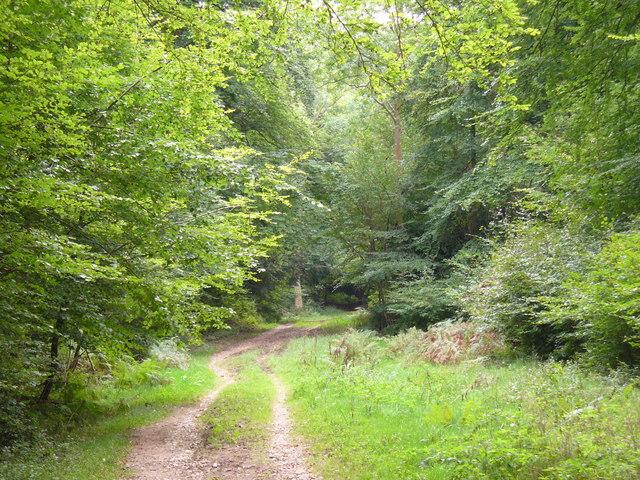 Ranmore Common Bridleway - geograph.org.uk - 560363