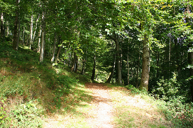 Selworthy, in Selworthy Woods - geograph.org.uk - 547718