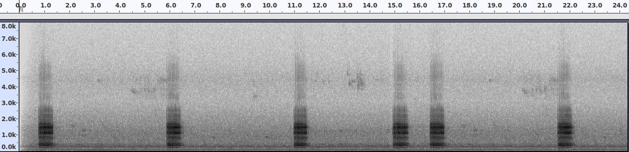 SpektrogramDrummingDendrocoposMajor.png
