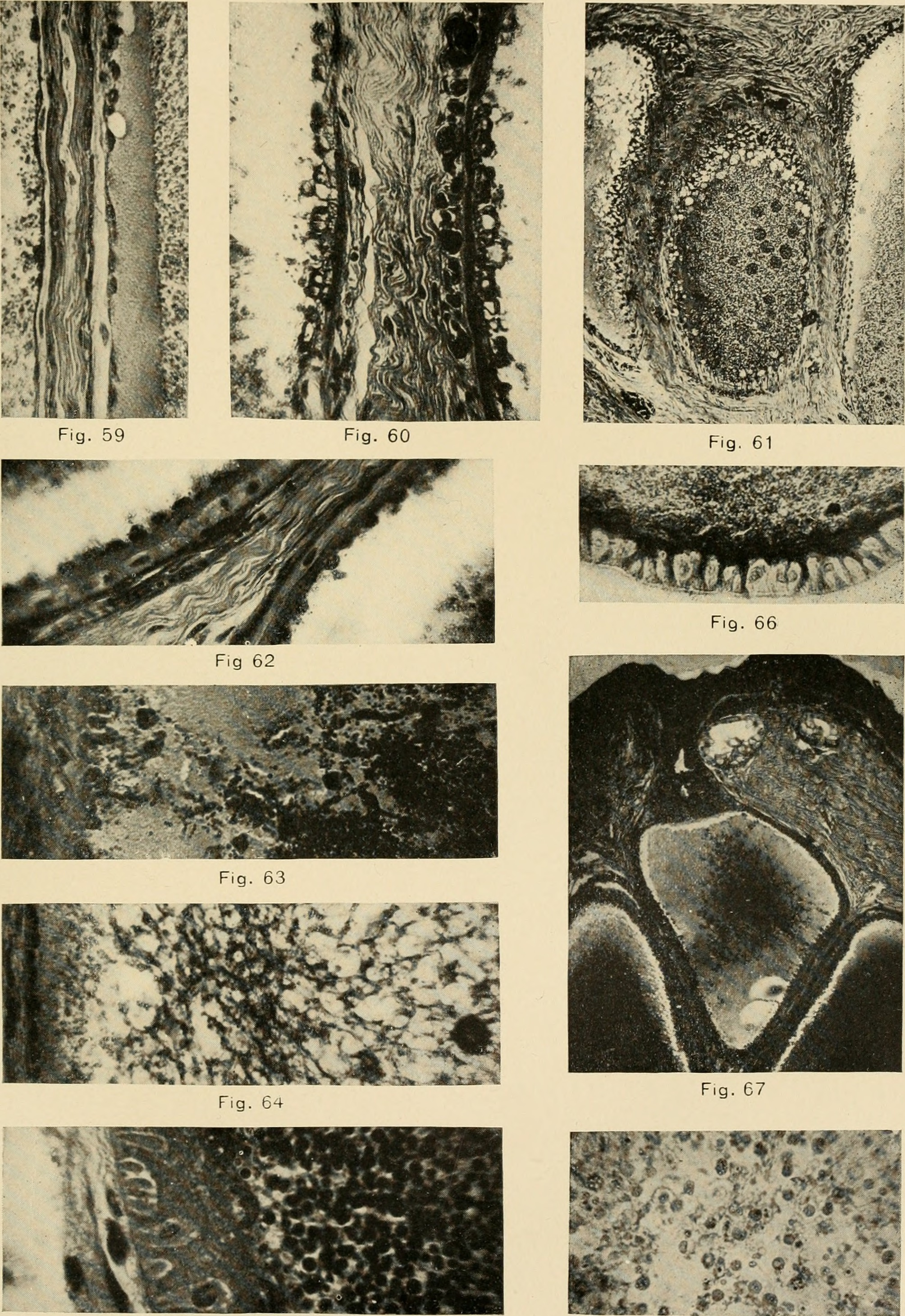 File:The American journal of anatomy (1909) (18128160826).jpg ...