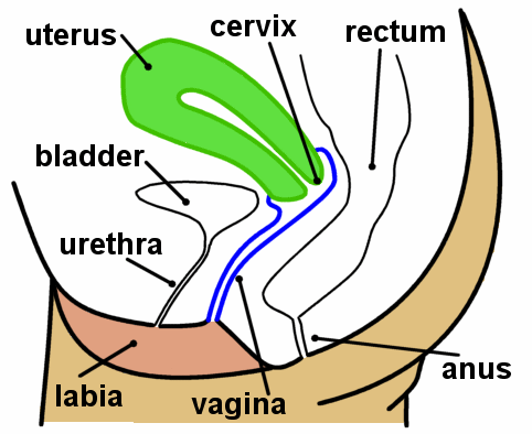 Uterus and vagina with captions