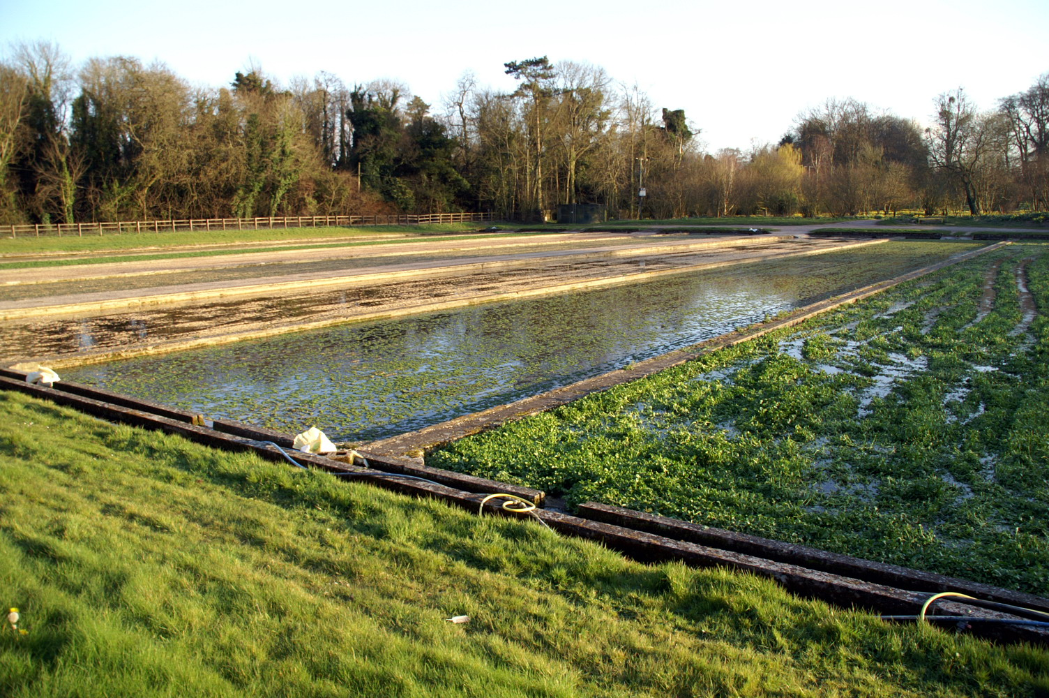 Watercress beds in Warnford, Hampshire