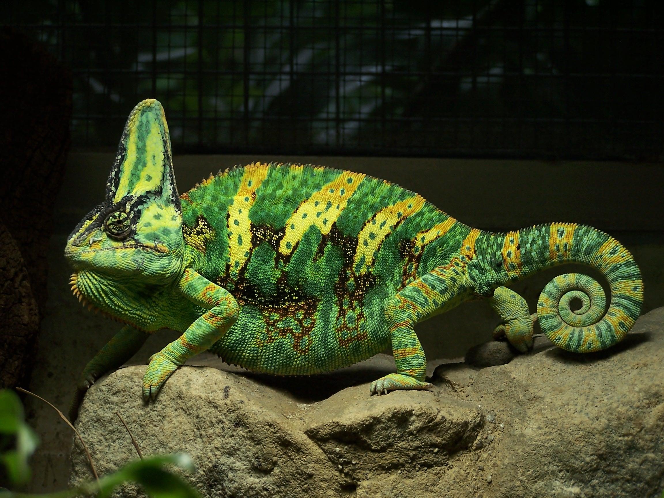 Image Result For Chameleon Changing Color
