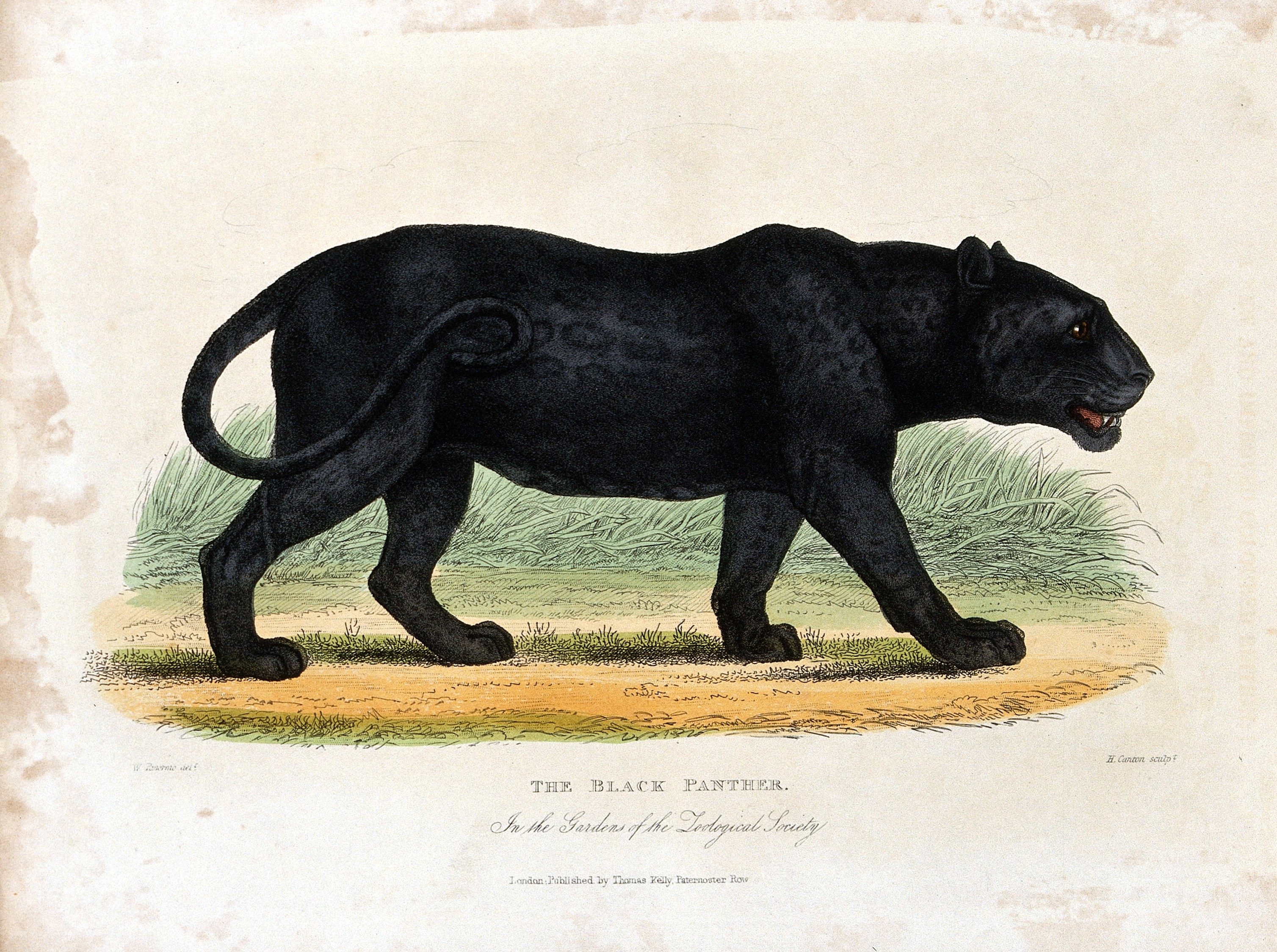 Image Result For Jungle Book Full