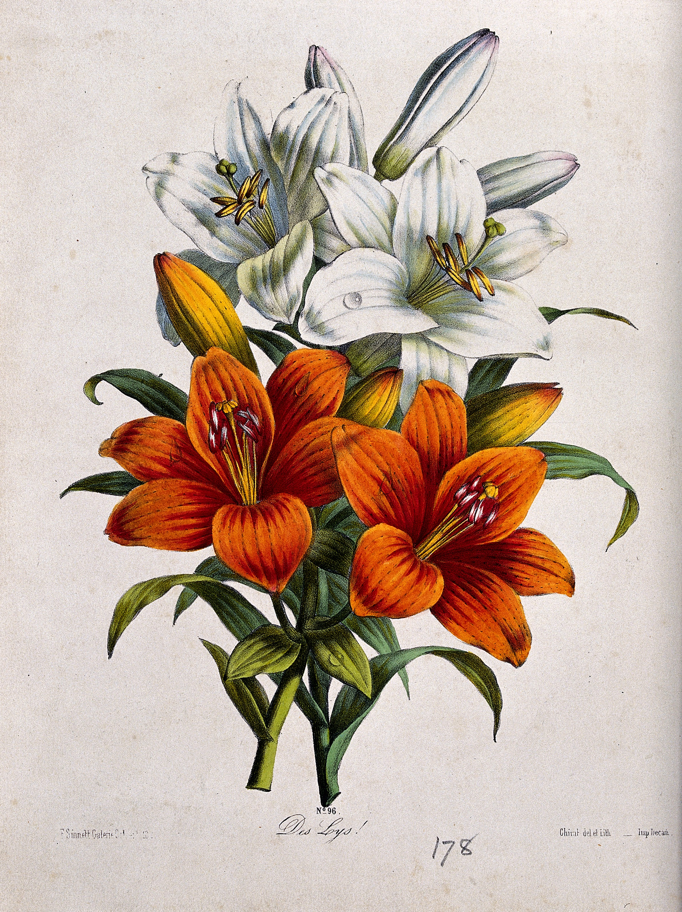 Filea bunch of orange and white lily flowers coloured lithograp filea bunch of orange and white lily flowers coloured lithograp wellcome v0044589 izmirmasajfo