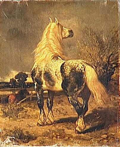 Percheron in a pasture