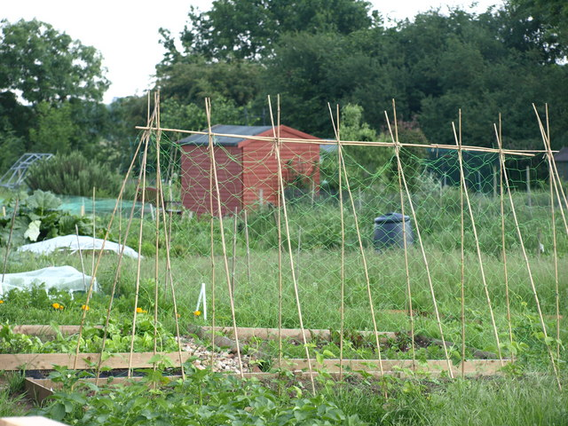 File:Allotment Gardens - geograph.org.uk - 832255.jpg