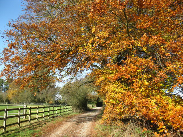 Autumn on the Oxfordshire Way - geograph.org.uk - 1588783