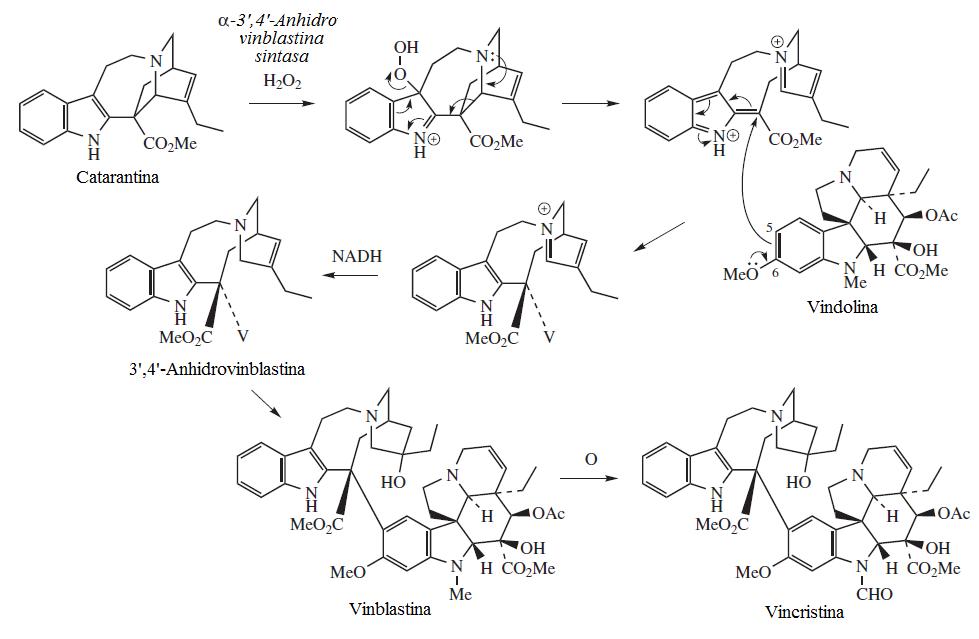File bios ntesis de los alcaloides de la for Cuidados de la vinca