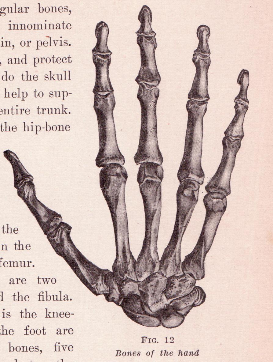 Filebones In Handg Wikimedia Commons
