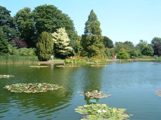 Burnby Hall and Gardens, Pocklington, East Riding of Yorkshire, England. Lily ponds in Pocklington.