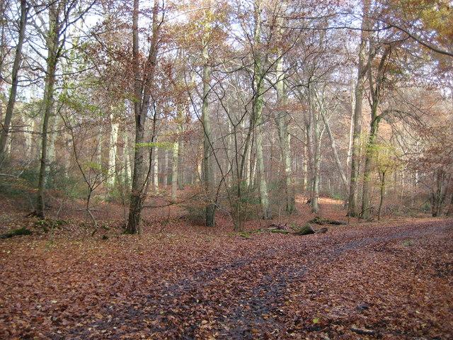 Burnham Beeches, Victoria Drive - geograph.org.uk - 1046759