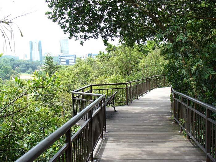 File:CanopyWalk-KentRidgePark-Singapore-20070809.jpg - Wikimedia Commons
