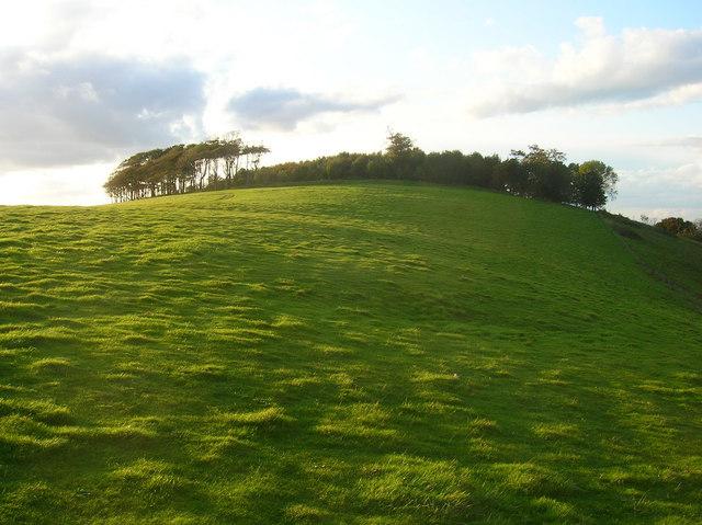 Chanctonbury Ring - geograph.org.uk - 991317