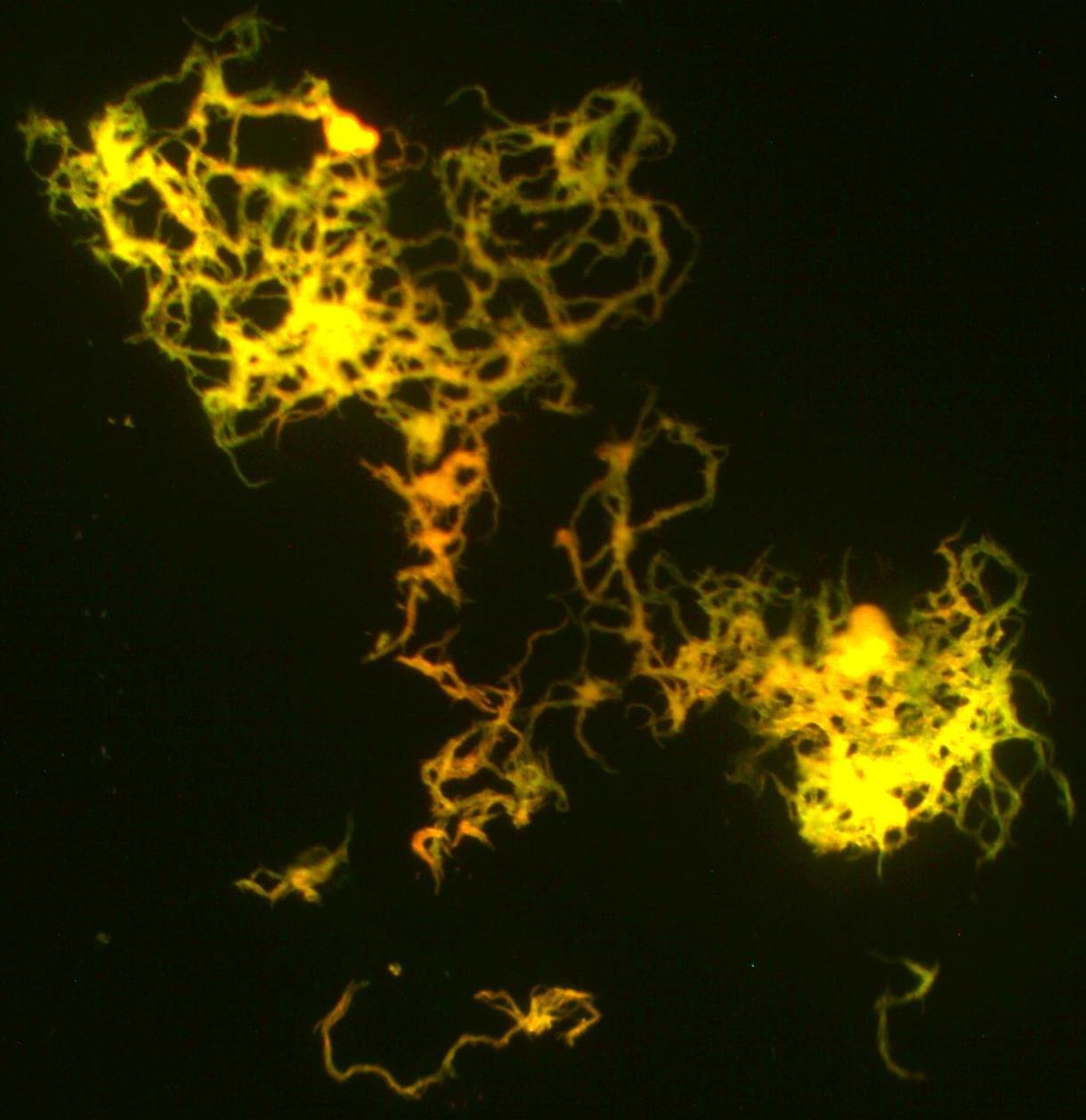 wiki luminescence upcscavenger