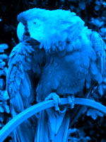 Color gradient map (blue) palette sample image.png