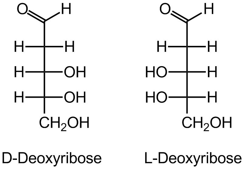 D Deoxyribose Дезокси�...