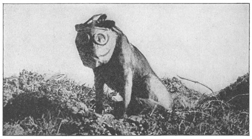Animaux soldats Dog_with_mask_WWI