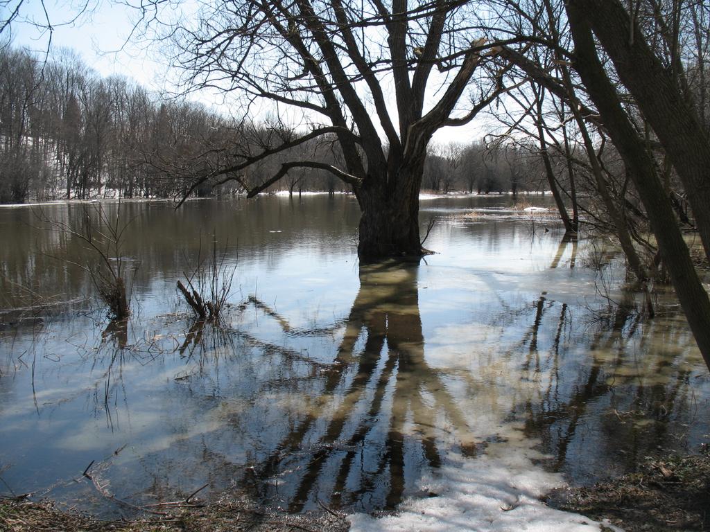 Eramosa River in Guelph Ontario early spring.jpg