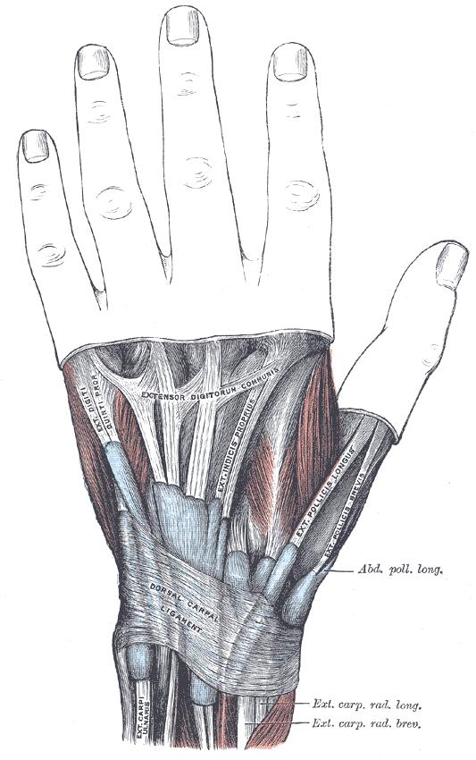Bol u zglobu ruke (prikazan na slici)