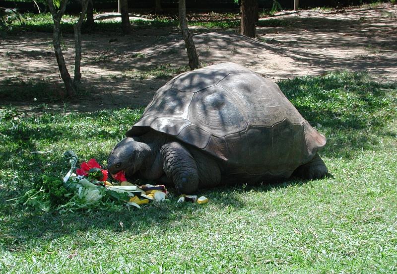 Harriet berühmte Schildkröte auf Villa Amanda der Schildkrötenblog