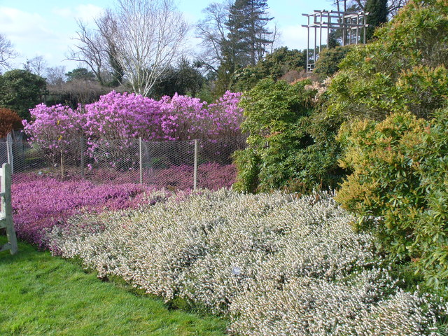 Heath Garden, Nymans - geograph.org.uk - 709754