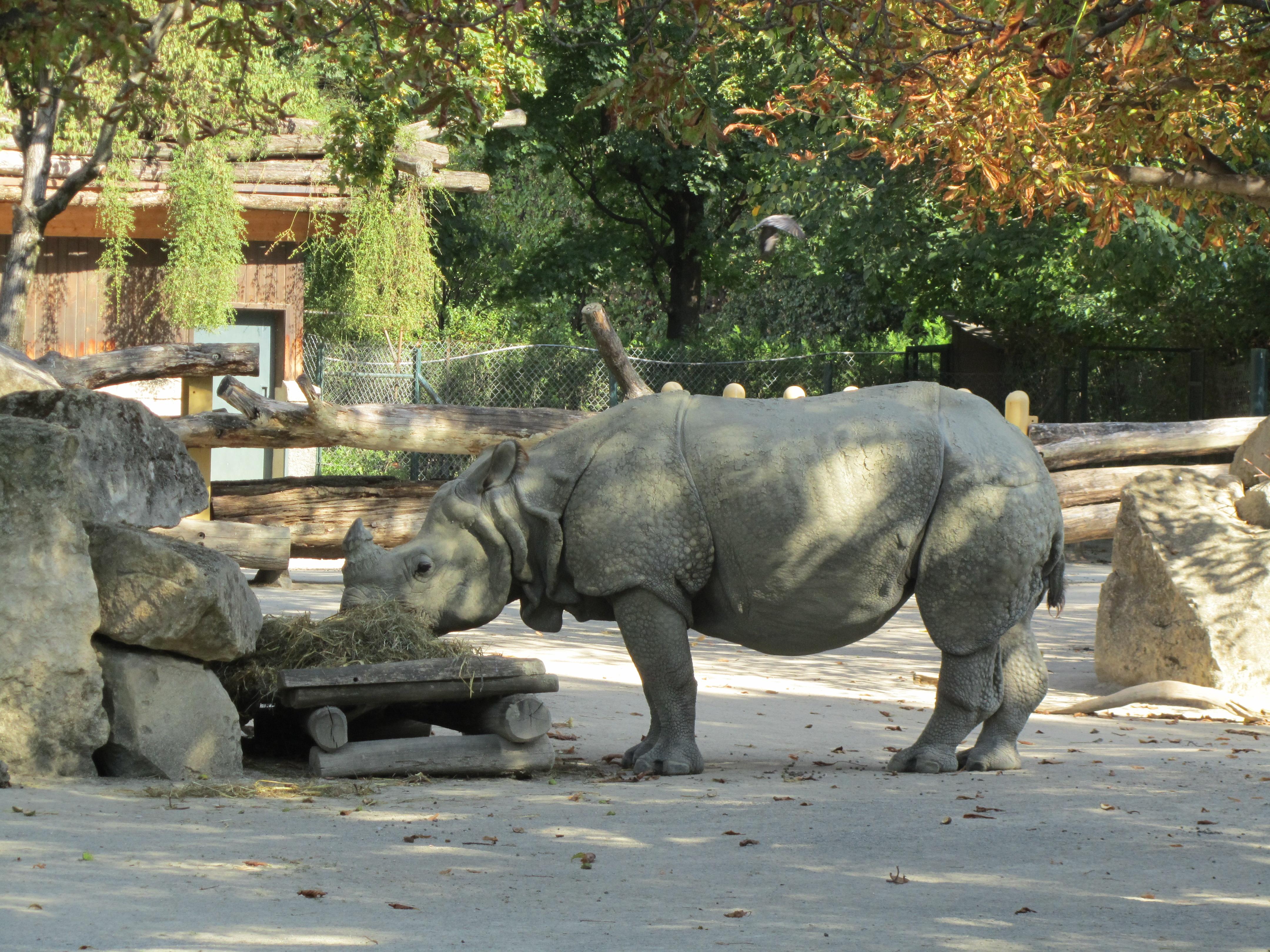 Indian Rhinoceros at Vienna Zoo (6363281781).jpg