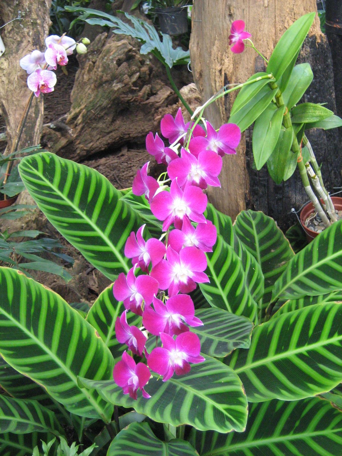 File jardin botanico de medellin orquidea 3 jpg for Plantas de un jardin botanico