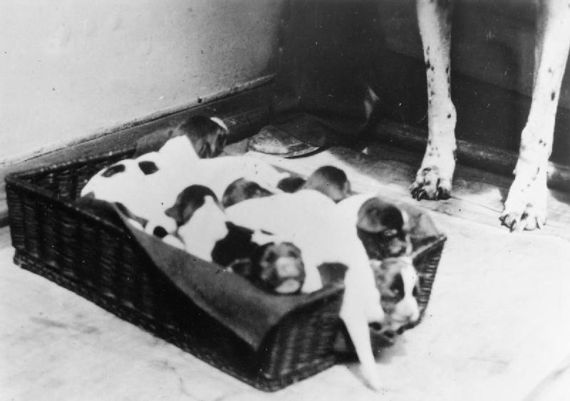 Judy puppies hu 43988