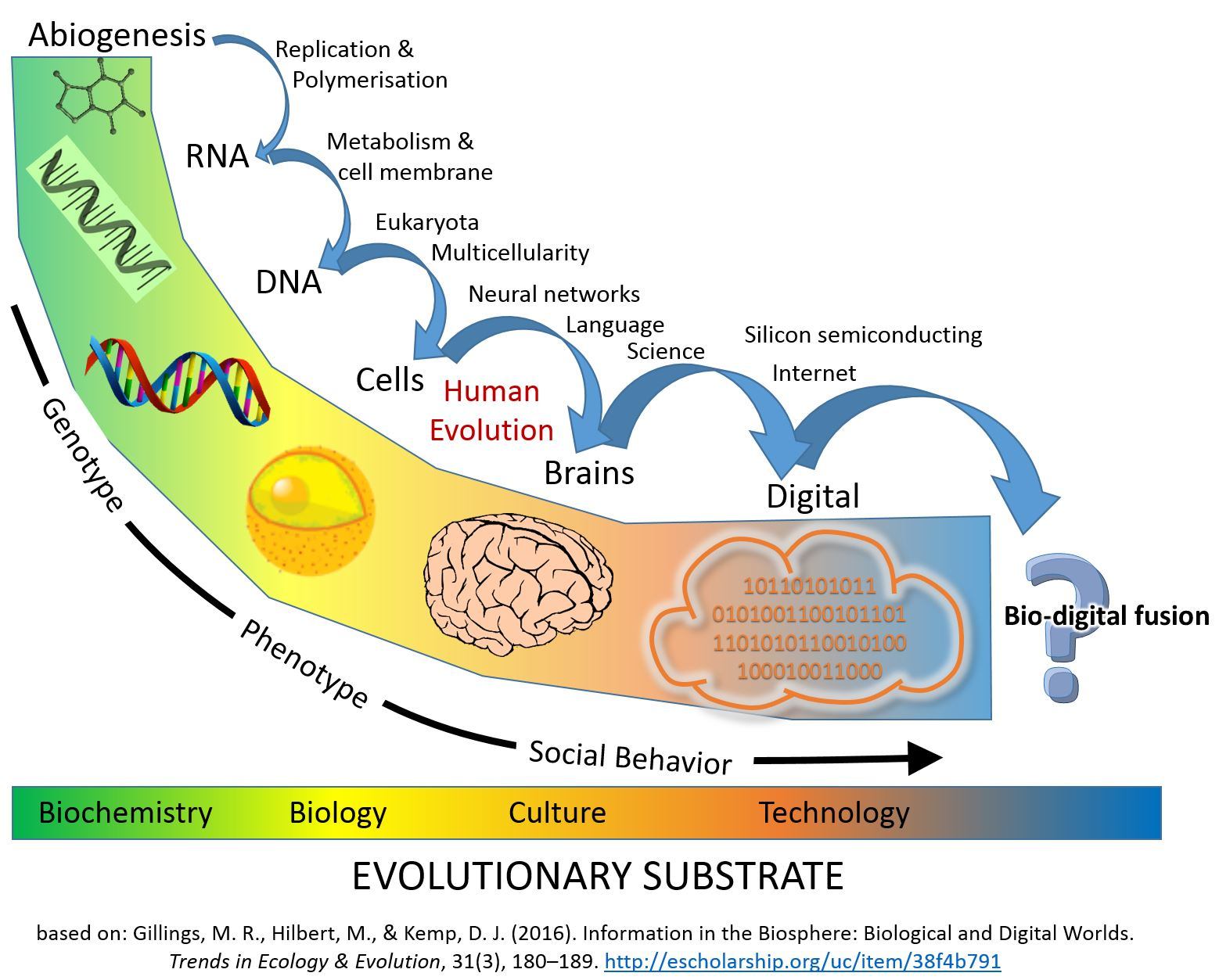 Archivo:Major Evolutionary Transitions digital.jpg ...