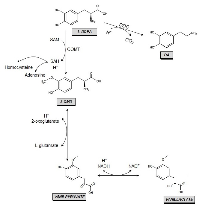 synthesis and metabolism of steroids in molluscs