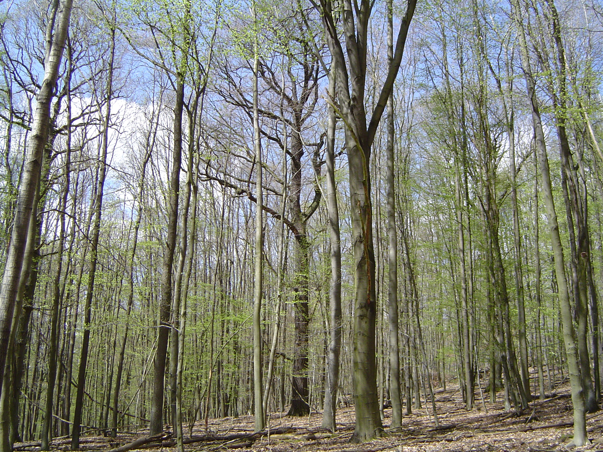 Temperate deciduous forest - Wikiwand