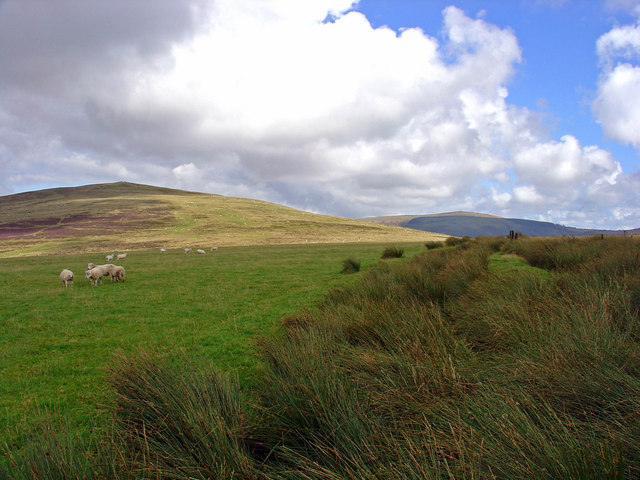 Preseli sheepwalk - geograph.org.uk - 930739