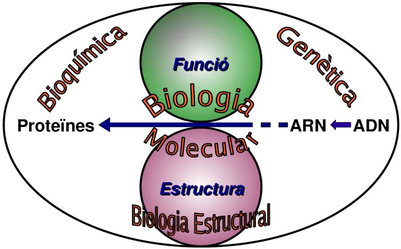 File Relacio Biologia Molecular Amb Altres Camps Biologia